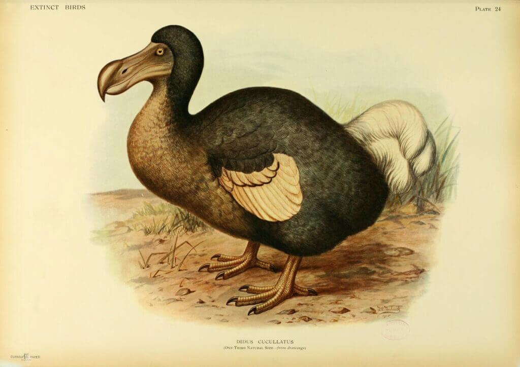 extinct animal dodo bird