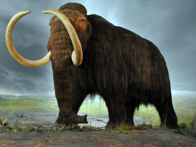 Animals brought back from extinction Woolly Mammoth