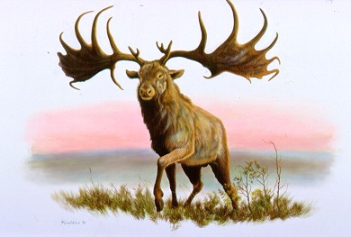 animals brought back from extinction irish elks